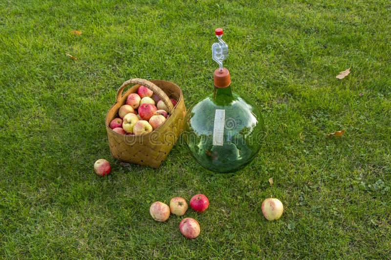 Ready for made home made wine. Glass bottle for home made apple wine with apples on the grass. Bottle with airlock in plastic demijohn for fermenting apple wine stock images