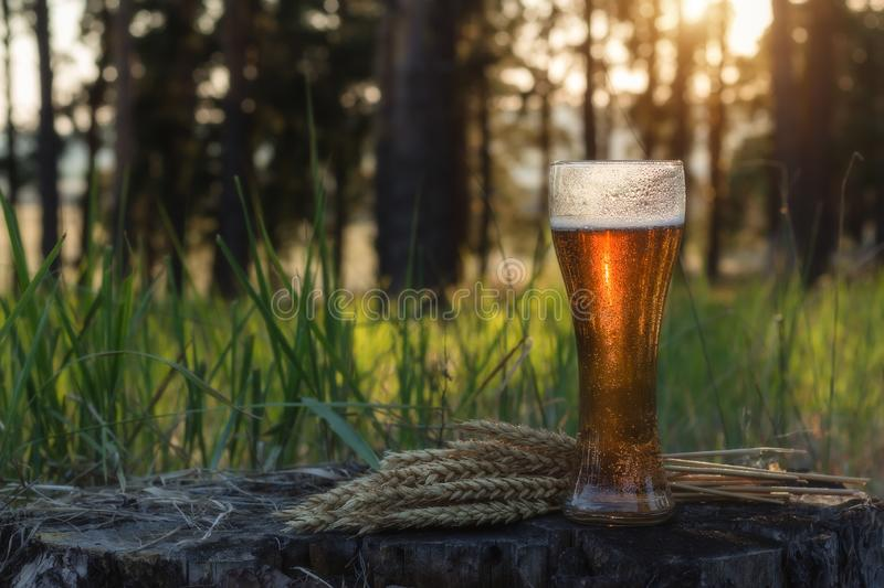 Glass of cold beer at sunset. Summer landscape. Recreation and relax. Fresh brewed ale stock image