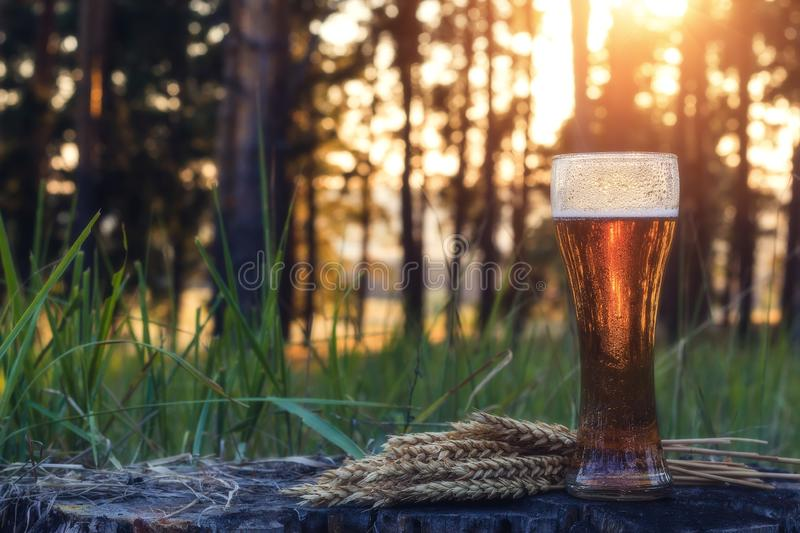 Glass of cold beer at sunset. Summer landscape. Recreation and relax. Fresh brewed ale royalty free stock photo
