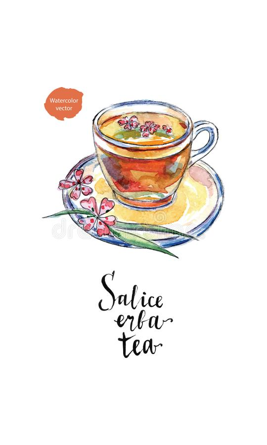 Glass cup of salice erba tea willow-herb tea in watercolor vector illustration