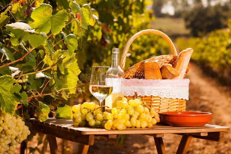 Glass of white wine ripe grapes and picnic basket on table in vineyard royalty free stock images
