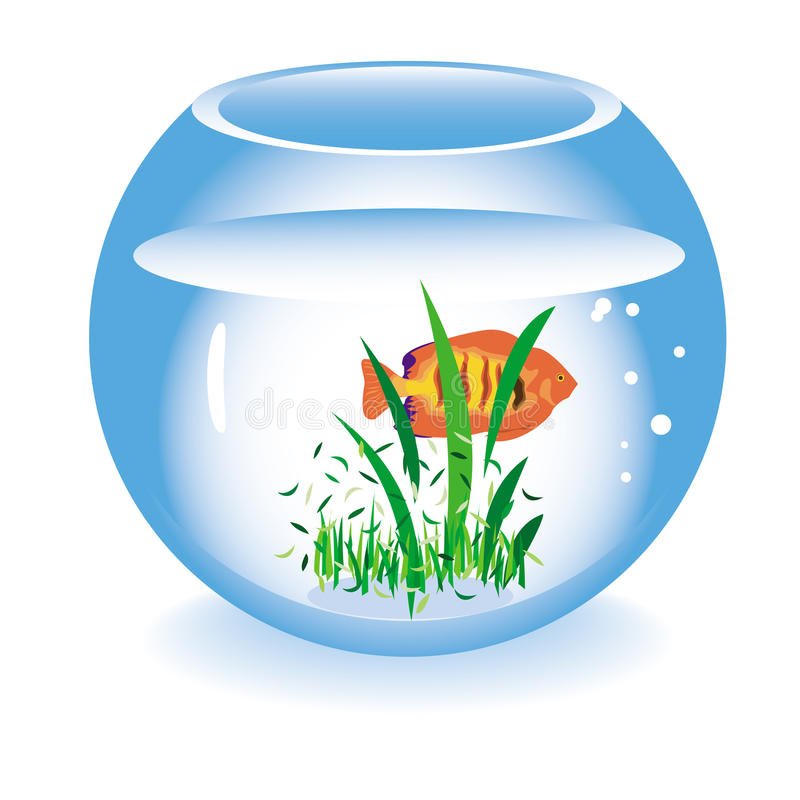 Download Glass Fishbowl With A Fish Stock Image - Image: 20666021