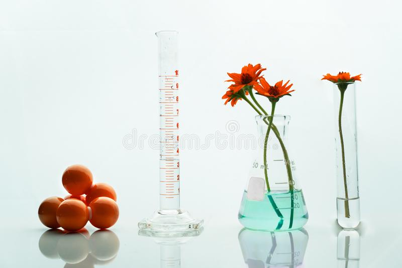 Glass flask cylinder test tube with molecular structure and orange herbal flower in science laboratory whit. Glass flask cylinder test tube with molecular royalty free stock photos