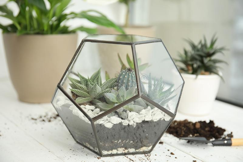 Glass florarium with succulents on wooden window sill. Transplanting home plants stock photography