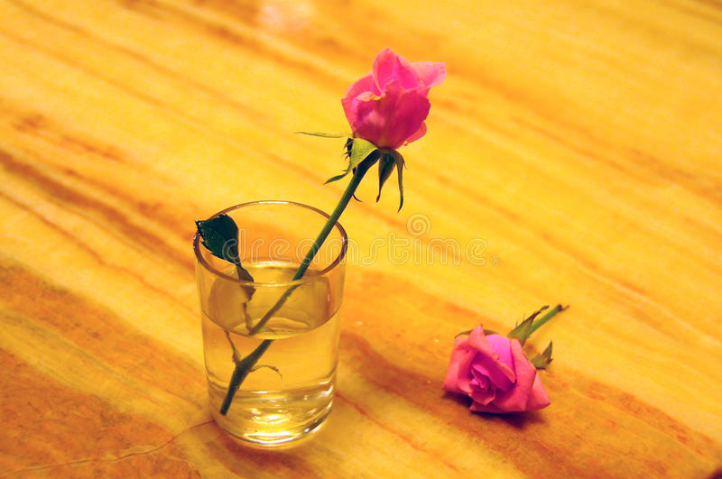 Glass and flower royalty free stock photography