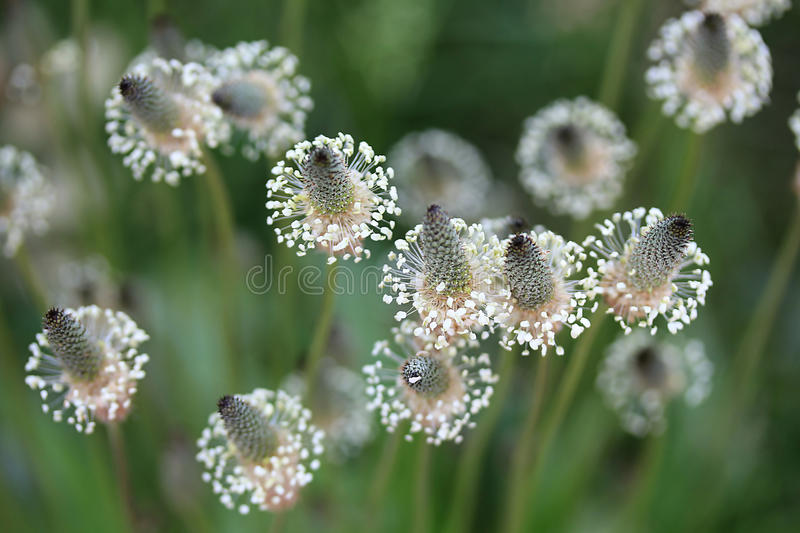 Glass flower. Even the grass is taken as the most beautiful postcard royalty free stock photos
