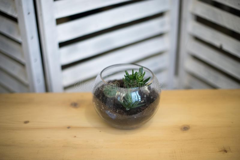 Glass flower pot, form of a dodecahedron with Echeveria and aloe, various succulents in the interior in the aquarium composition o royalty free stock photos