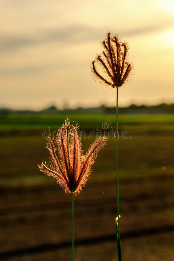 Glass flowers add vintage effect. At sunset stock photo