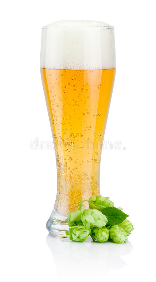 Glass of fresh beer with green hops isolated on white background royalty free stock photography