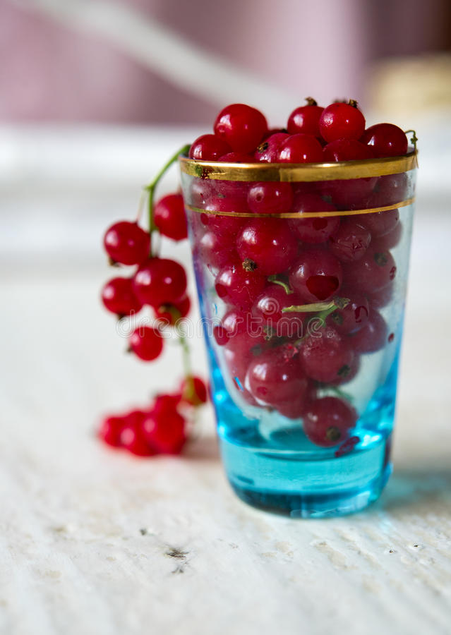 Download Glass full of Cranberries stock photo. Image of environment - 25663264