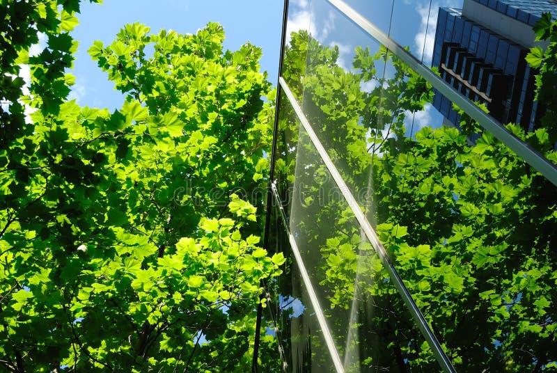 glass gröna kontorsreflexioner för byggnad arkivfoto
