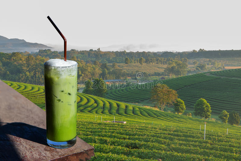 A glass of Green tea smoothies in the organic green tea planati. Green tea smoothies in the organic green tea planation royalty free stock photo