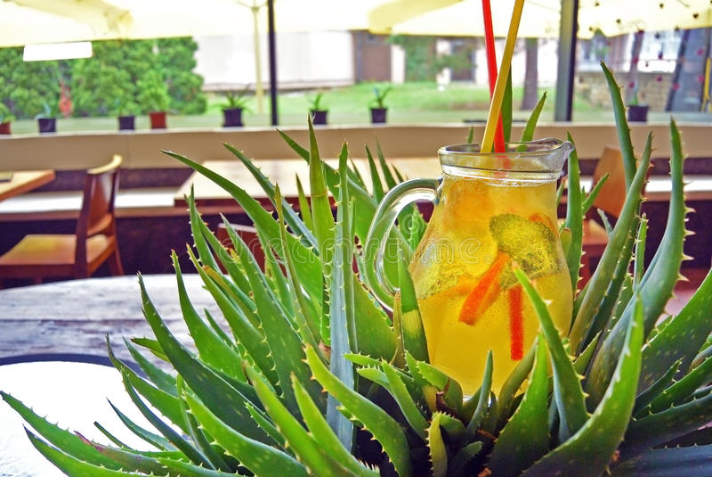 Homemade lemonade cocktail. lime mint orange lemon. Glass of homemade tropic lemonade in aloe vera bush. Summer refreshing cocktail with lime, orange, mint stock photo