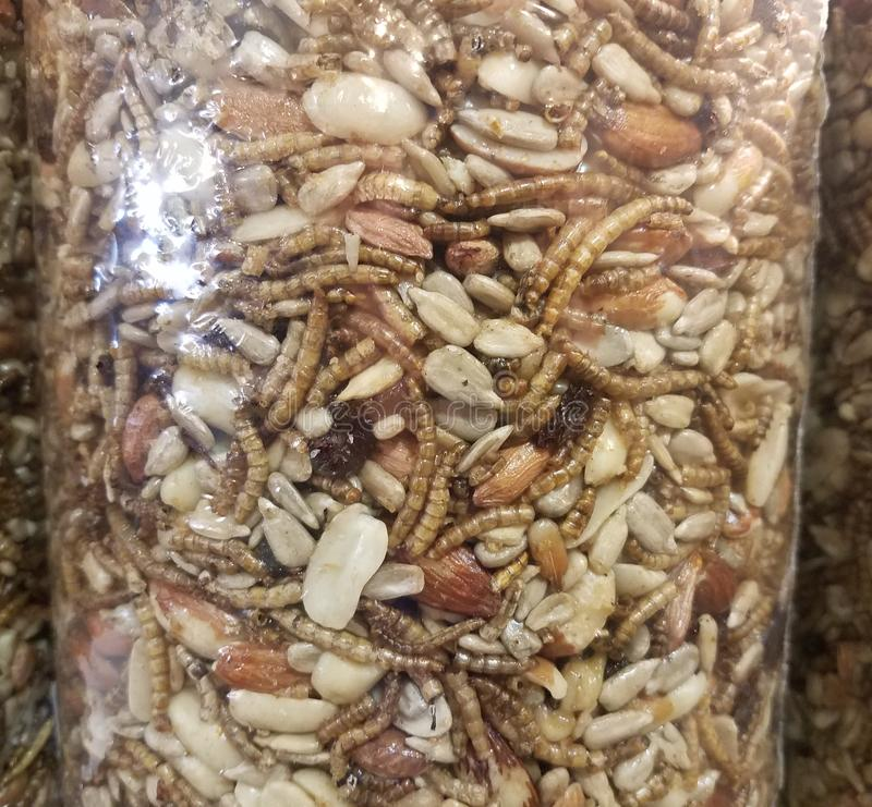 Glass jar with nuts, seeds, fruit, and worms. Glass jar filled with nuts, seeds, fruit, and worms stock photo