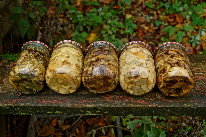 Glass jars with canned mushrooms on a wooden board royalty free stock photography