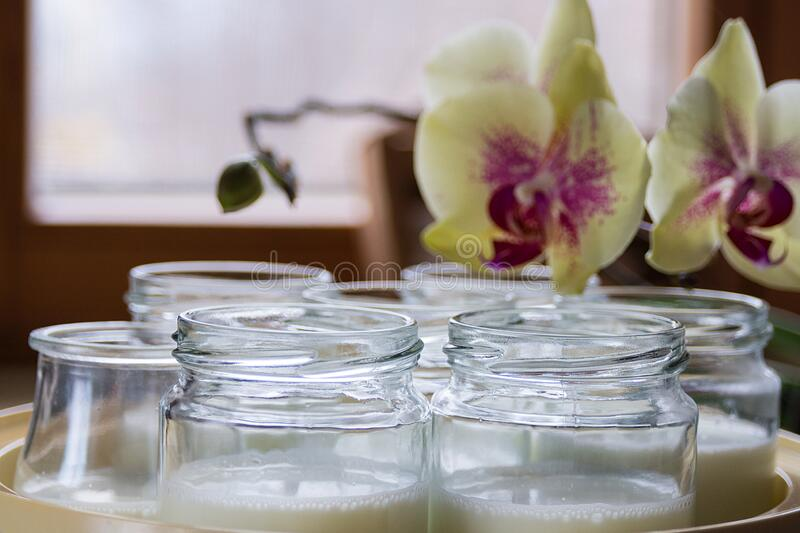 Glass jars with natural homemade organic yogurt in yogurt maker. Nearby is a delicate pink orchid flower.  stock photo