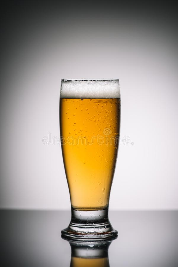 Glass with light beer with foam on gray. Reflecting surface royalty free stock image