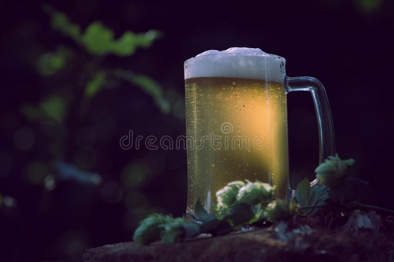 Glass of light beer with hop against background of green trees outdoor stock photography