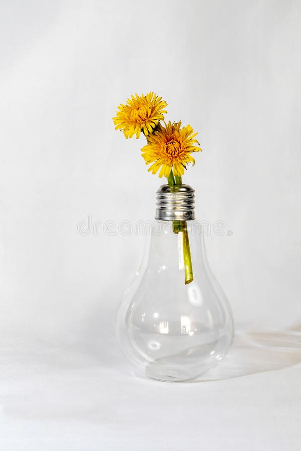 Glass Light Bulb Vase and Dandelions royalty free stock images