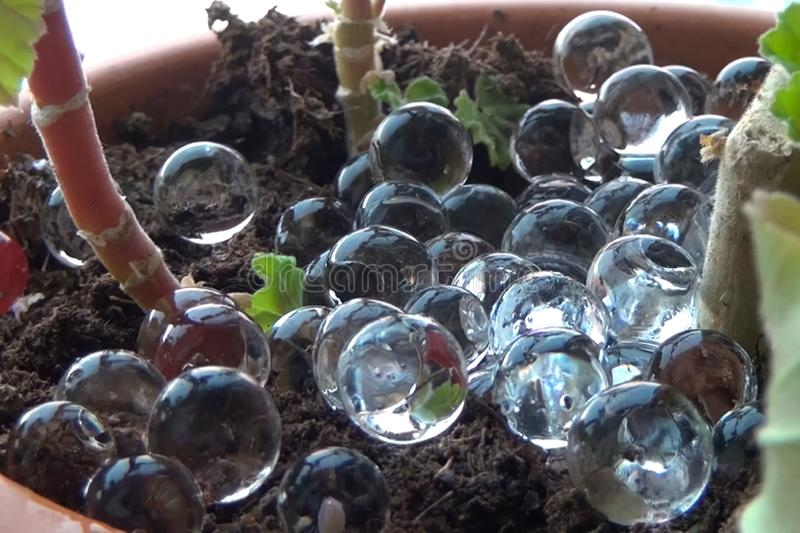 Glass marbles balls in pot with a houseplant royalty free stock photo