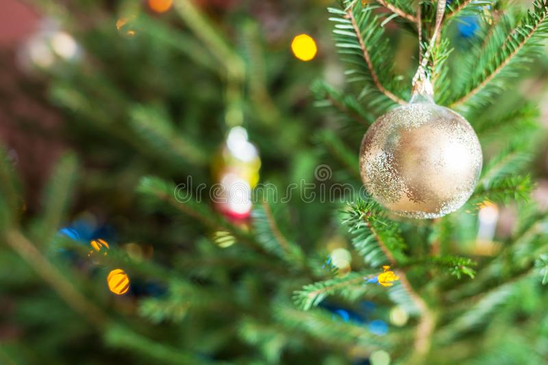 Glass ornaments on twigs of live Christmas Tree royalty free stock image