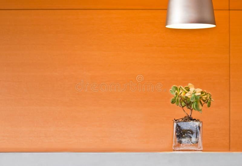 Glass Planter Under A Lamp Stock Photos