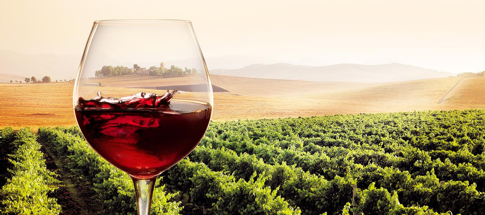 Glass of red wine in sunny vineyard landscape stock photography