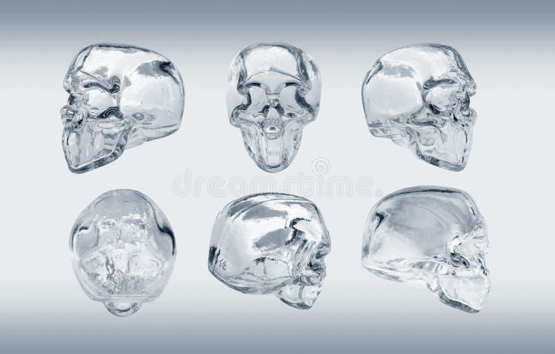 Glass skull stock images
