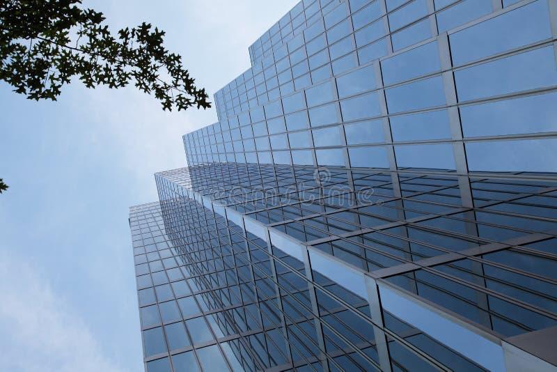 Glass skyscraper with tree. A glass skyscraper with a tree stock photo