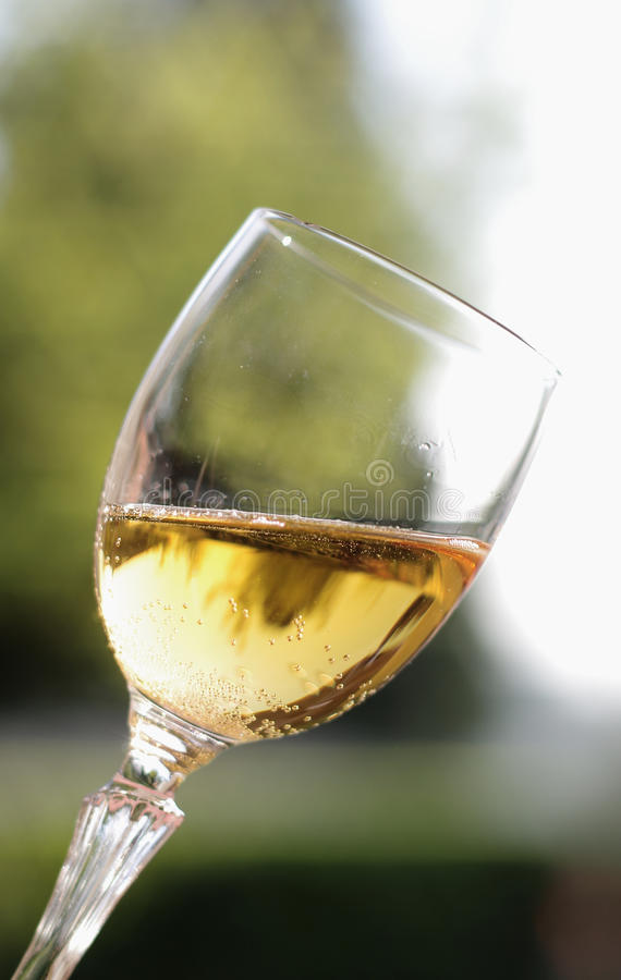 Glass of sparkling wine. On a blurred background with sky and foliage of trees stock images