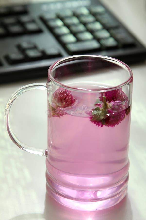 glass teacup royaltyfri fotografi