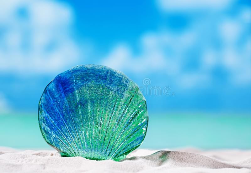 Glass tropical sea shell on white beach sand under the sun lig. Ht, shallow dof stock images