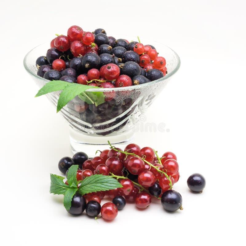 Glass vas med den svarta och röda vinbäret på vit bakgrund arkivbild