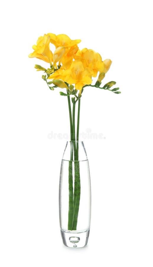 Glass vas med härliga freesiablommor royaltyfri foto