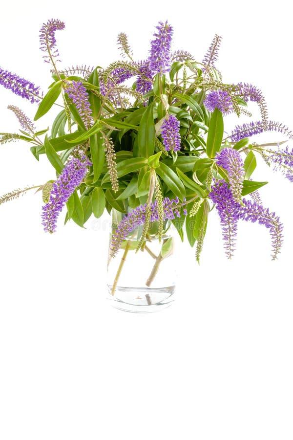 Glass vas med lila blommor för sommar royaltyfri bild