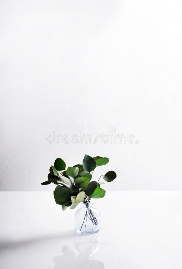 A glass vase with a bouquet of evergreen tree stands on a light background. Side view. Minimalism stock photography