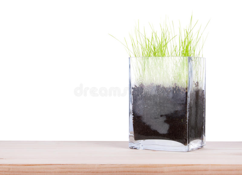 Glass vase with a young fresh green grass stock photo