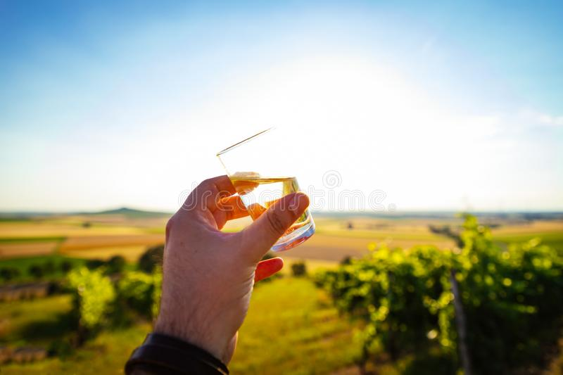 A glass of white wine at a sunset in the vineyards of Rheinhessen royalty free stock photo