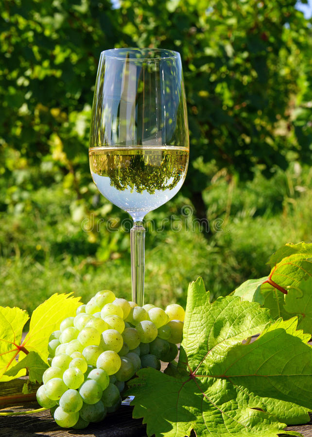 Download Glass of wine and grapes stock photo. Image of sunshine - 26953474
