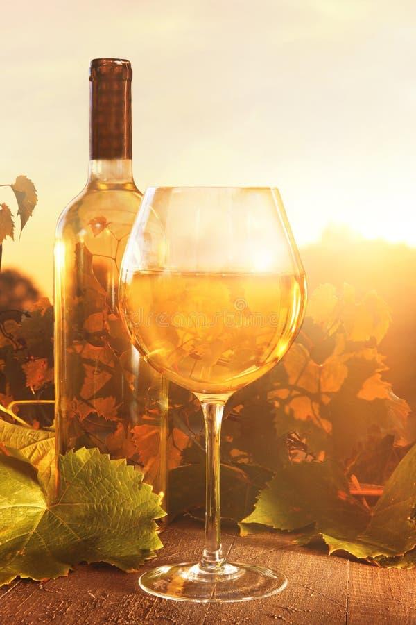 Glasse белого вина и бутылки против виноградников стоковые изображения