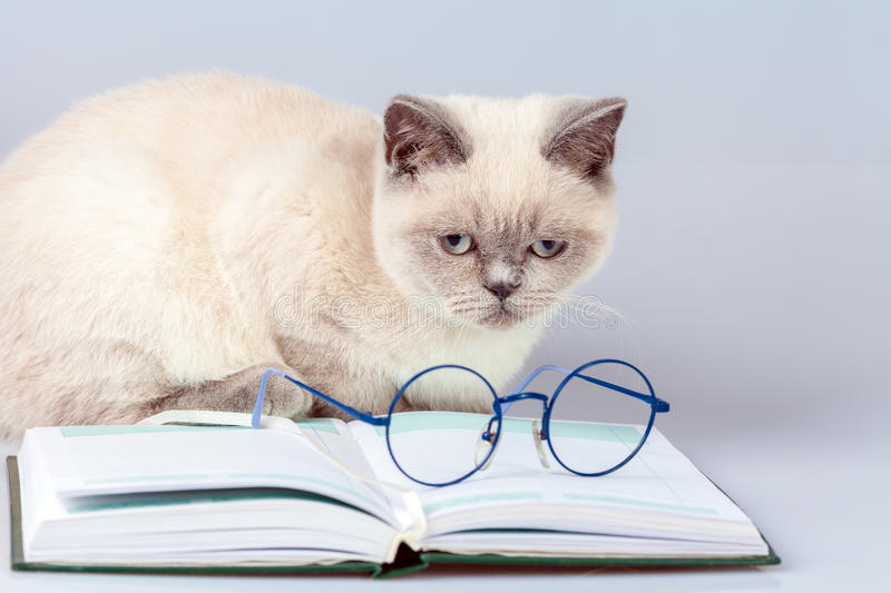 Glasses, lying on the book. Cute business cat with glasses, lying on the notebook book stock images