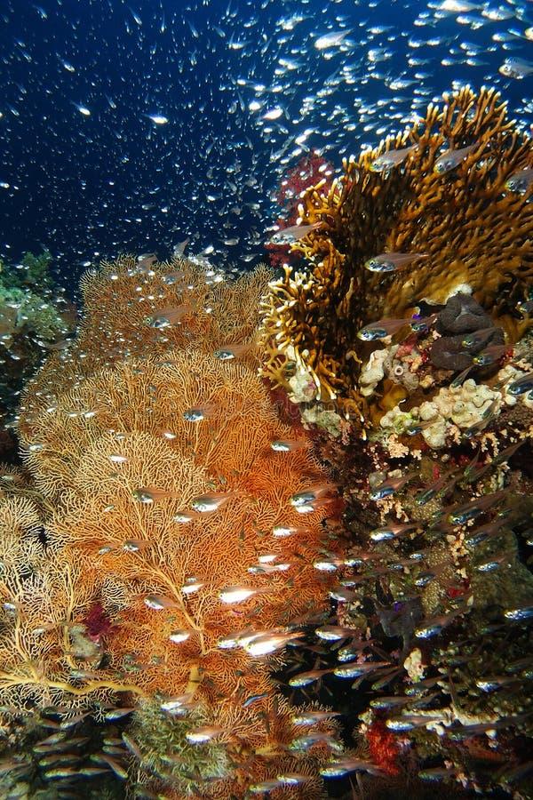 Glassfish bad framme av gorgoniaen arkivfoton