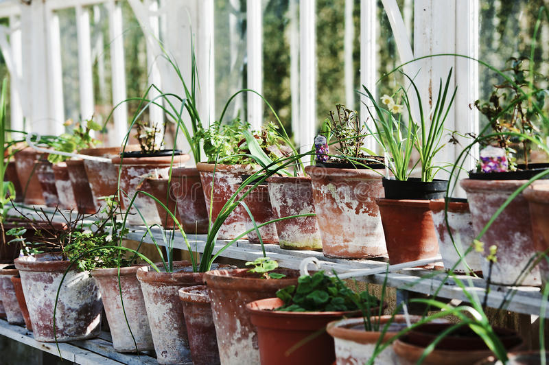 Glasshouse. Pots in glasshouse on country stock images