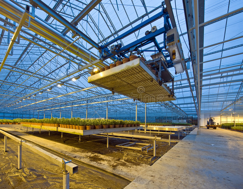 Glasshouse automation. A robotic pick and place unit in a tungsten lit glasshouse, arranging trays of lilies at dusk stock photography