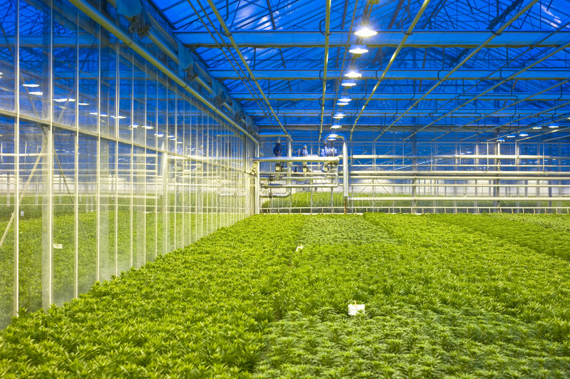Glasshouse climate control. The tubes and valves, regulating the climate control of a horticulture glasshouse, with various compartiments of lilies royalty free stock image