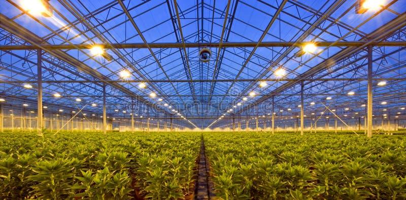 Glasshouse at dusk royalty free stock image