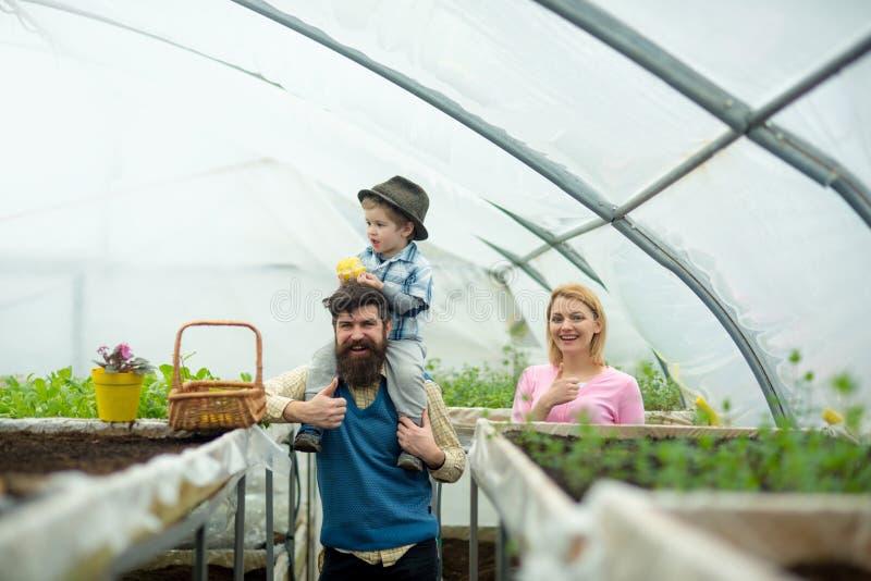 glasshouse trabalho da família na estufa estufa que cultiva com família feliz plantação da estufa Trabalho com flores foto de stock royalty free