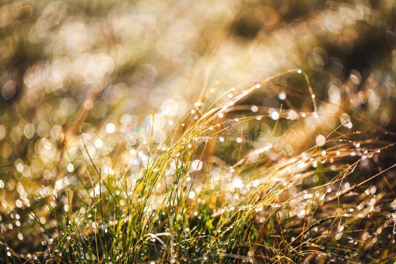 Glassi l'erba dopo una notte fredda nell'inverno fotografia stock libera da diritti