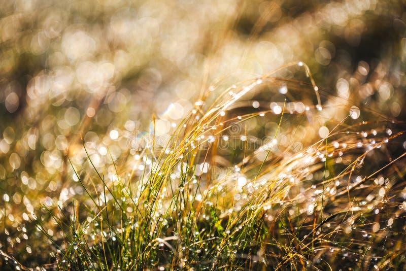 Glassi l'erba dopo una notte fredda nell'inverno a fotografia stock