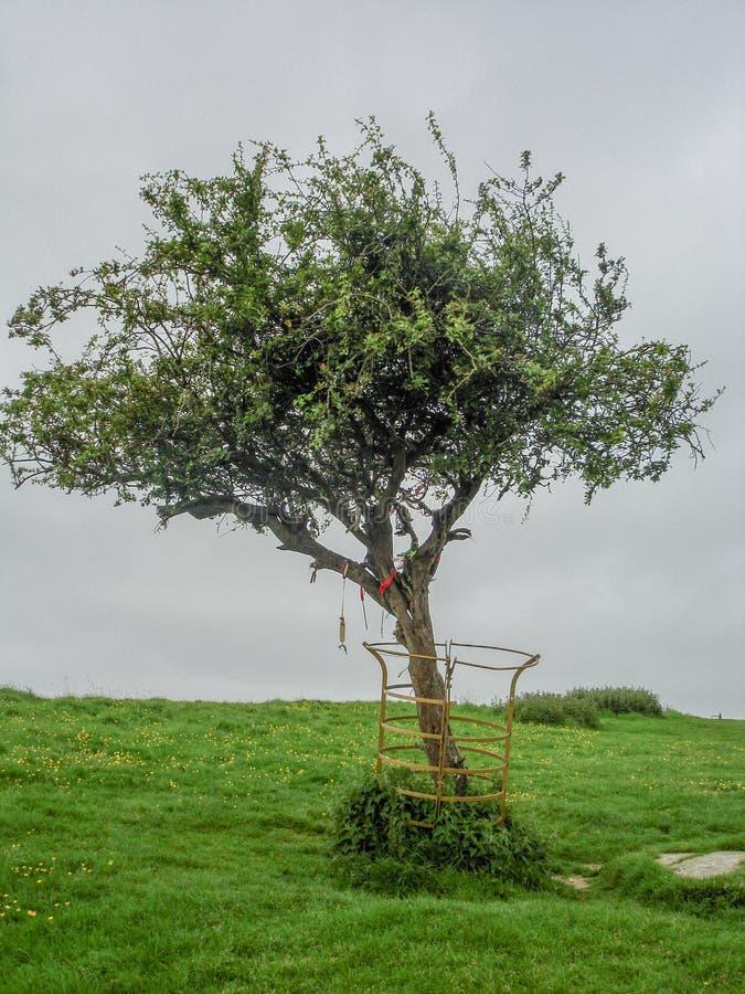Free Glastonbury Thorn, England Royalty Free Stock Photography - 112895677